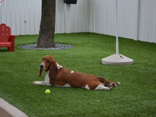 Artificial Grass Photos: Artificial Grass Huntington Beach, California Artificial Turf For Dogs, Dogs Runs