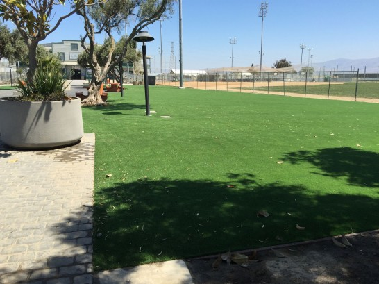 Synthetic Lawn Orange, California Roof Top, Parks artificial grass
