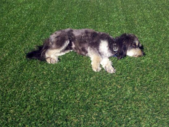 Artificial Grass Photos: Synthetic Lawn Universal City, California Cat Playground, Dogs